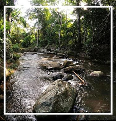 Río y Bosque